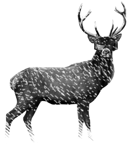 The Stag's Steeze